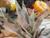 kompost rothwein_6