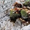 Blätter/Steine/Wasser_10