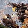 Blätter/ Steine / Wasser