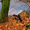 Blätter/Steine/Wasser_1