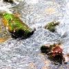 Blätter/Steine/Wasser_2
