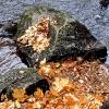 Blätter/Steine/Wasser_3