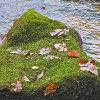 Blätter/Steine/Wasser_6