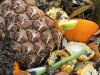 kompost rothwein_4