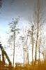 bäume/wellen