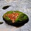 Blätter/Steine/Wasser_5