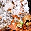 Blätter/Steine/Wasser_7