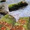 Blätter/Steine/Wasser_8