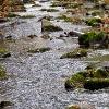 Blätter/Steine/Wasser_9